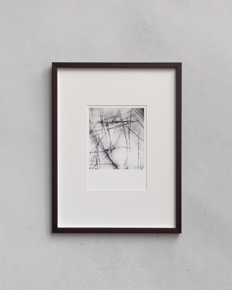 blackprint edition - Die Grüss Limited edition, microphotographs of feather. Artist: WONOW