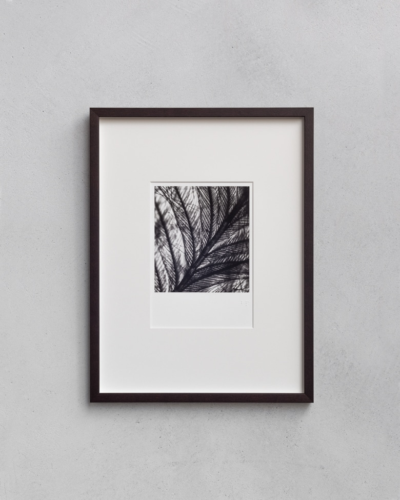 blackprint edition - Die Grüss Limited edition, microphotographs of feather. Artist: WONOW
