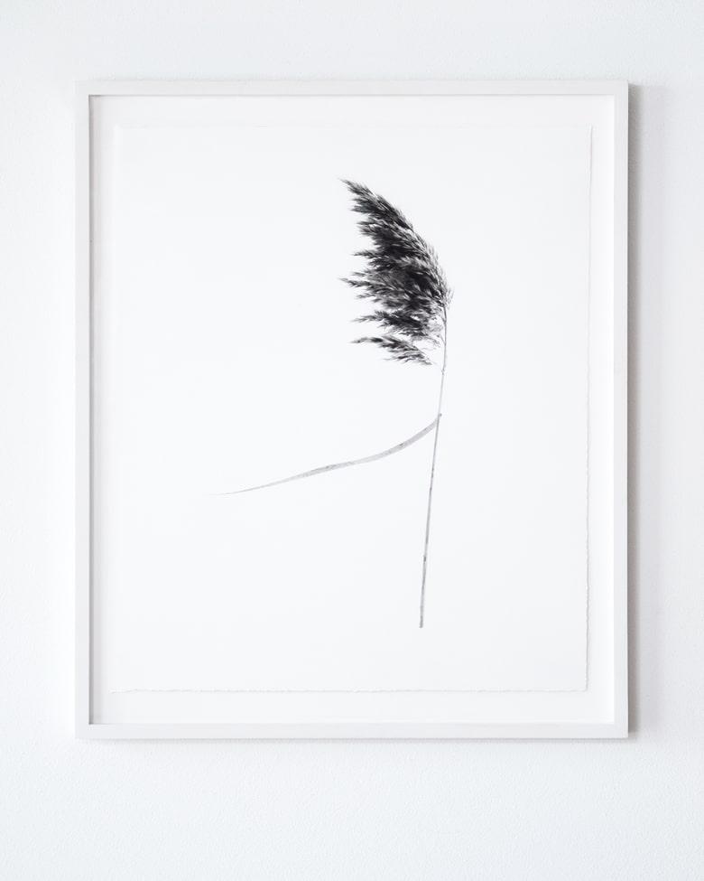 "blackprint edition Limited Artist Edition featuring Klaus-Martin Gareis - ""Schilfrohr"" with frame"