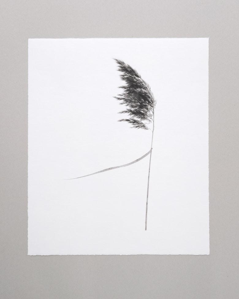 """blackprint edition Limited Artist Edition featuring Klaus-Martin Gareis - """"Schilfrohr"""""""